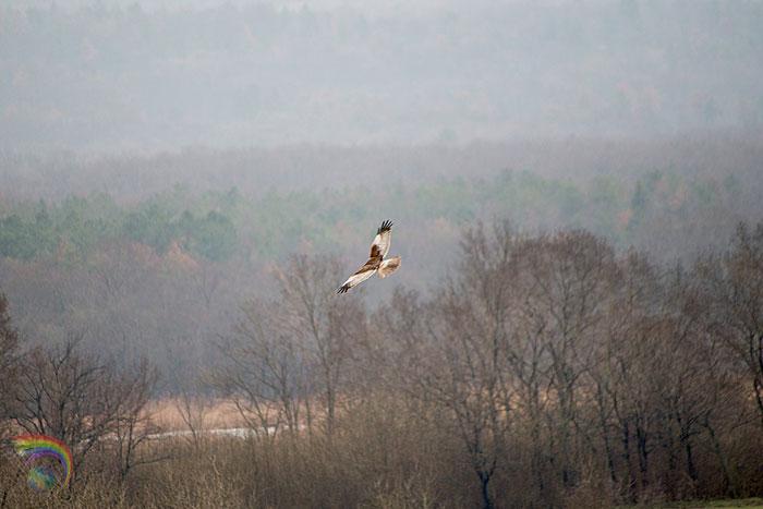 Birdwatching Bulgaria